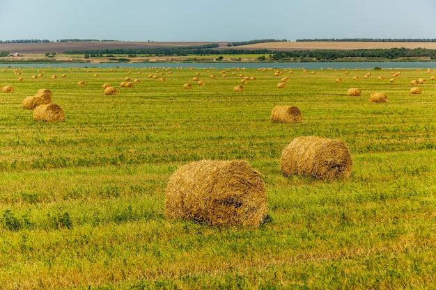 Fardos redondos de feno após a feno caem no campo