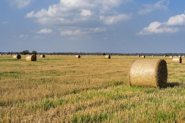 Fardos redondos de feno estão em um campo em um dia ensolarado contra um céu azul com nuvens.