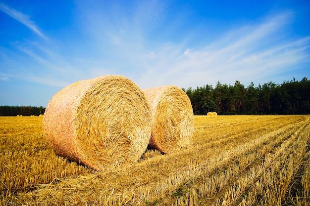 Fardos redondos de palha no campo. paisagem de verão.