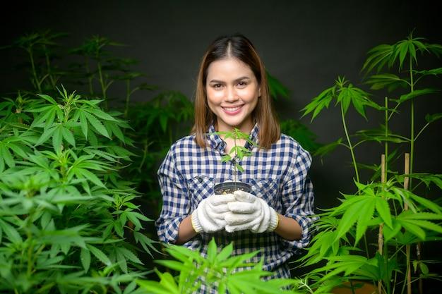 Farmer está segurando mudas de cannabis em uma fazenda legalizada.
