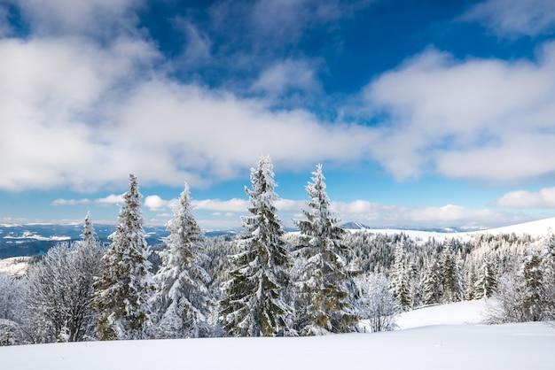 Fascinante paisagem ensolarada de uma floresta de inverno