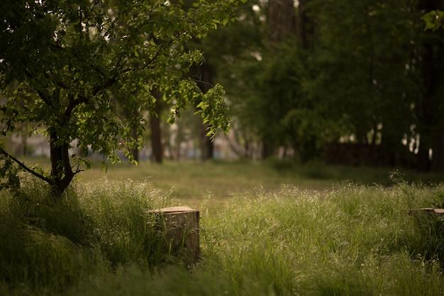 Fatia de árvore no chão perto de tronco de musgo