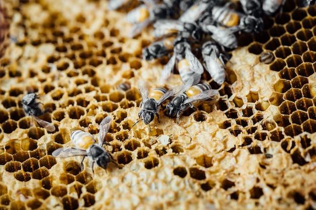 Favo de mel com fundo de abelha