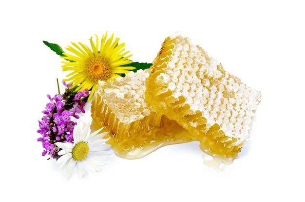 Favo de mel com mel perfumado, flores silvestres isoladas