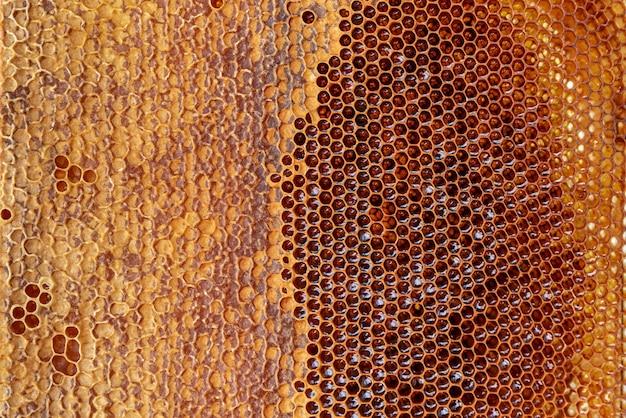 Favo de mel com textura de fundo de mel e padrão de uma seção de cera favo de mel apicultura