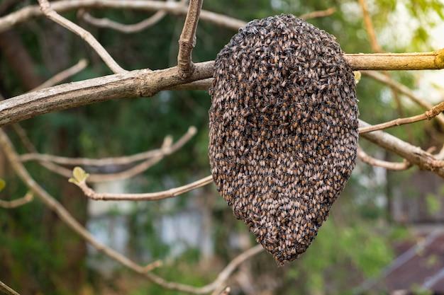 Favo de mel da selva em um galho de árvore na floresta
