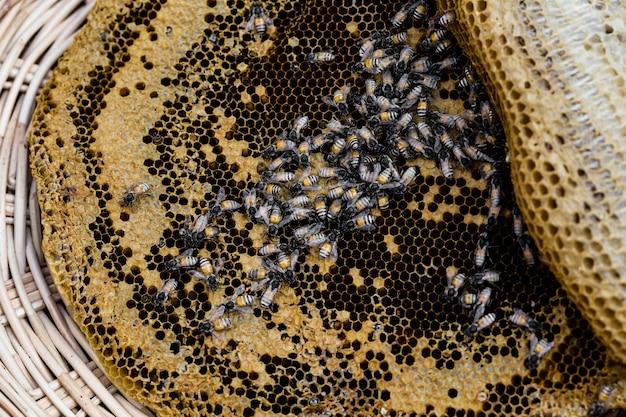 Favo de mel na mesa de madeira