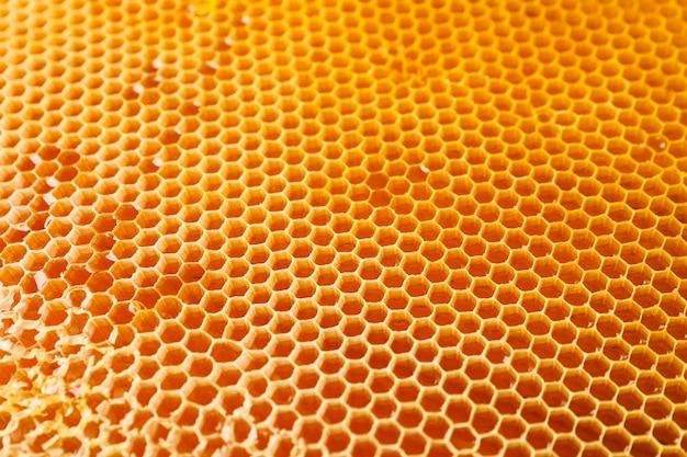 Favos de mel com doce mel dourado no fundo inteiro, close-up
