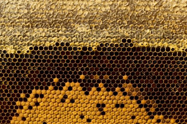 Favos de mel com mel, ninhada e perga