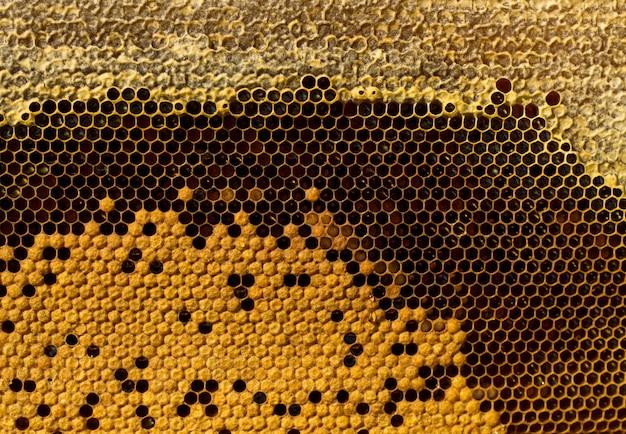 Favos de mel com mel
