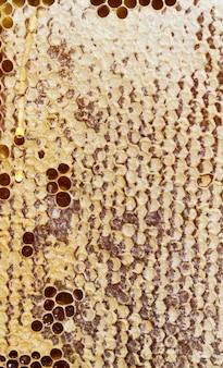 Favos de mel de forma hexagonal favo de mel fechado por abelhas para armazenar alimentos para o inverno, closeup