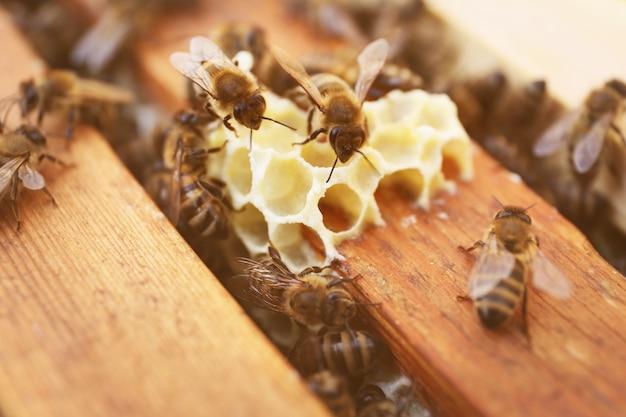 Favos de mel e abelhas na colmeia