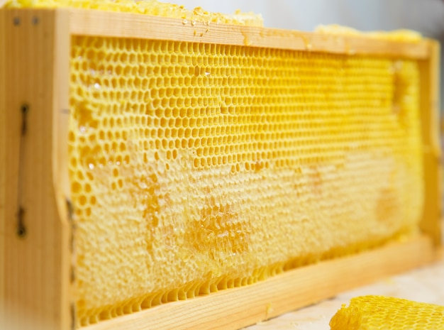 Favos de mel no quadro.