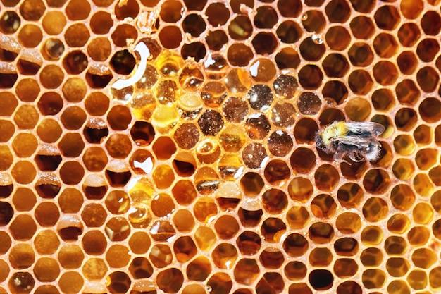 Favos de mel