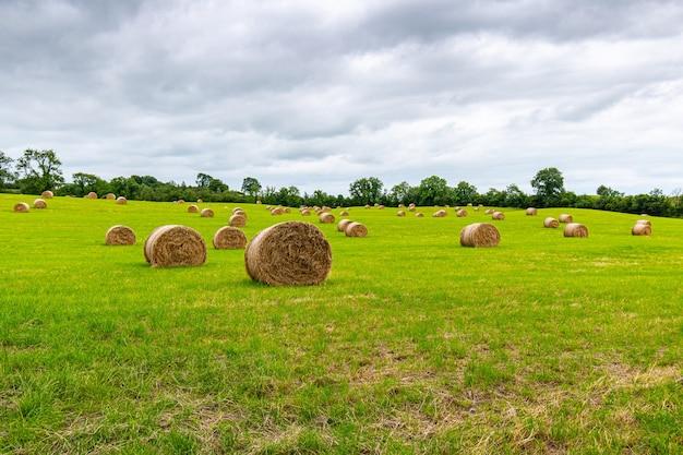 Fazenda com fardos de feno recém-enrolados com céu nublado baixo.
