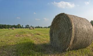 Fazenda, com feno