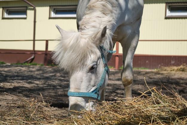 Fazenda de cavalos, rancho. cavalos pastando no paddock