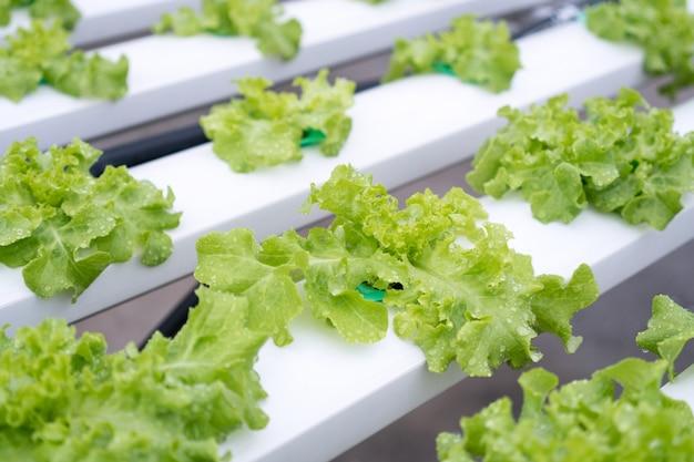 Fazenda de cultivo de hortaliças hidropônica orgânica