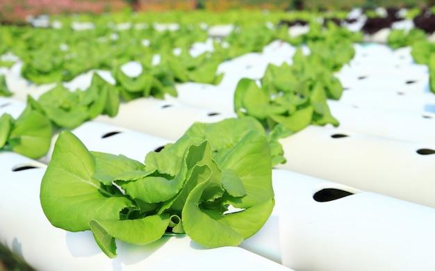 Fazenda de hidroponia de legumes