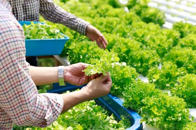 Fazenda de hidroponia, trabalhador colheita e coleta de dados ambientais de vegetais hidropônicos orgânicos de alface na horta da fazenda.