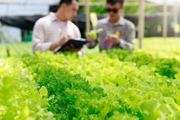 Fazenda de hidroponia, trabalhador testando e coletando dados ambientais de vegetais hidropônicos orgânicos de alface na horta da fazenda.