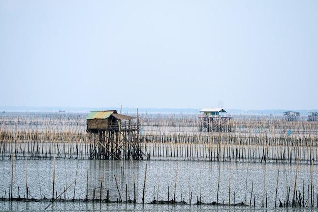Fazenda de mexilhão no mar ao longo da floresta de mangue