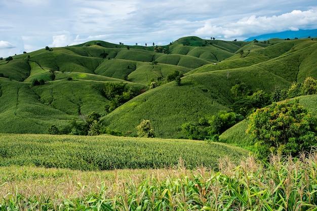 Fazenda de milho na colina com céu azul