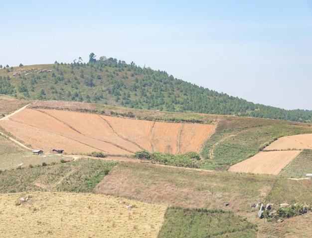 Fazenda de milho seco