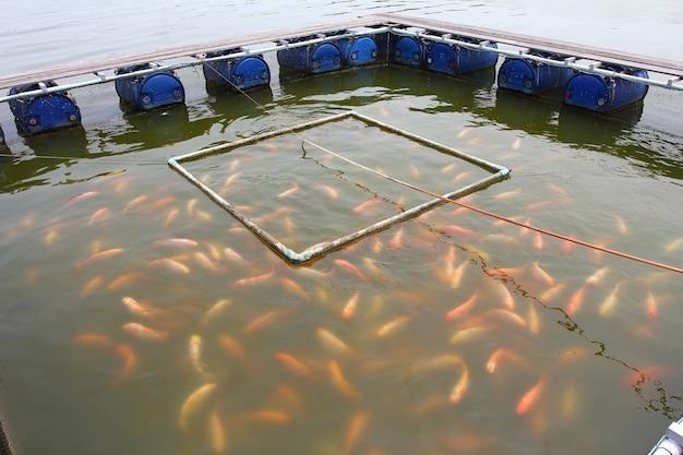 Fazenda de peixes localizada no país tailandês