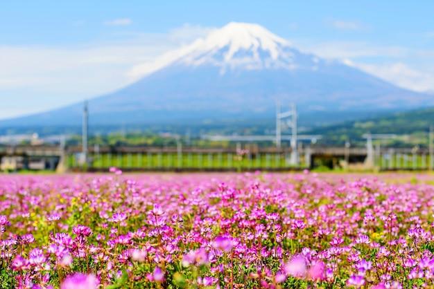 Fazenda de plena floração de shibazakura com mt.fuji fundo em shizuoka