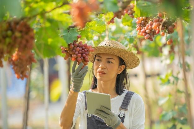 Fazenda de uva vermelha. mulher de macacão e chapéu de palha vestido de fazenda