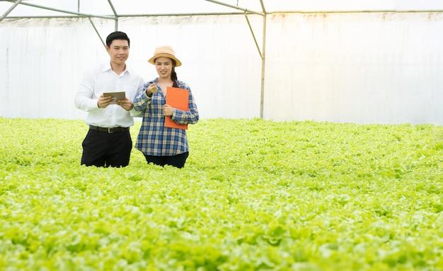 Fazenda de vegetais orgânicos, agricultores asiáticos inspecionam vegetais orgânicos na fazenda