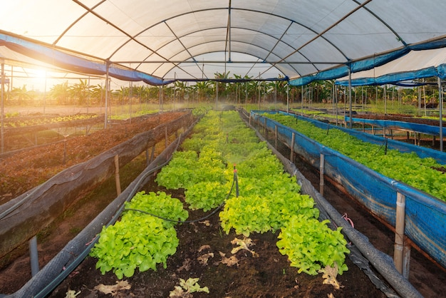 Fazenda de vegetais orgânicos
