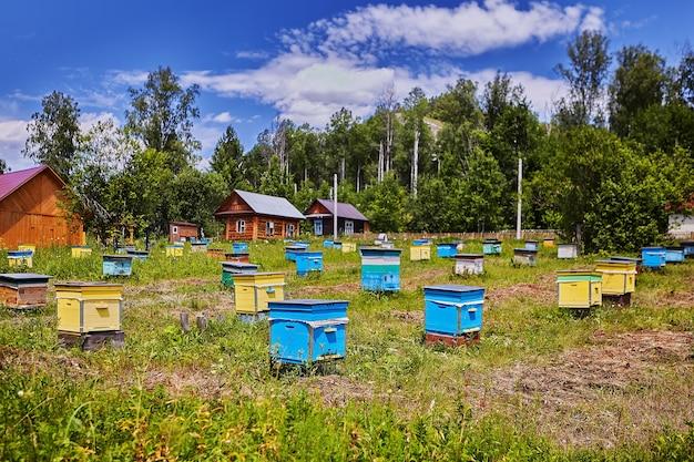 Fazenda do apicultor, muitas colmeias de madeira coloridas em áreas agrícolas, dia ensolarado.