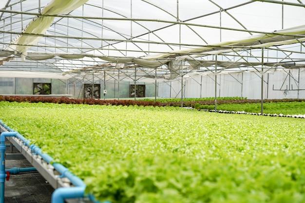 Fazenda hidropônica e estufa com muitos vegetais e alimentos.