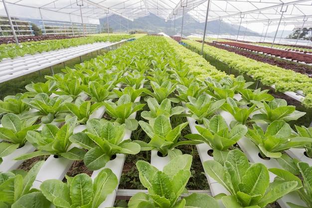 Fazenda hidropônica