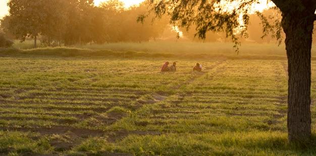 Fazenda indígena
