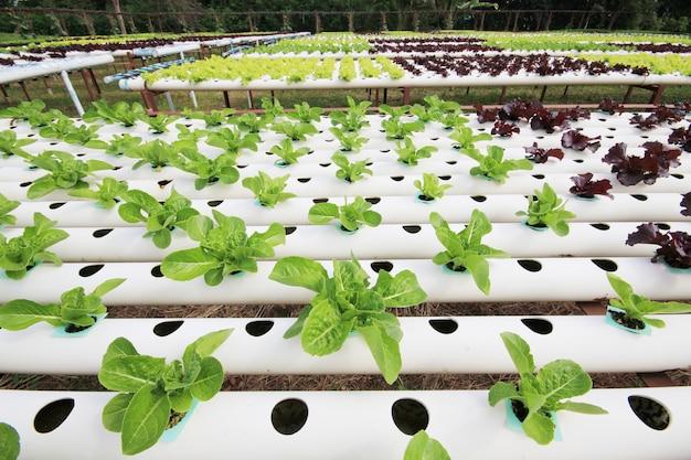 Fazenda vegetal hidropônica.