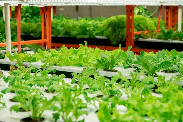 Fazenda vertical interna com mudas de verduras em fileiras sob lâmpadas led em estufa de viveiro