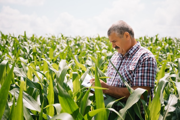 Fazendeiro adulto verificando plantas em sua fazenda. agrônomo segura tablet no campo de milho e examinando safras. conceito de agronegócio. engenheiro agrônomo em um campo de milho com um tablet.
