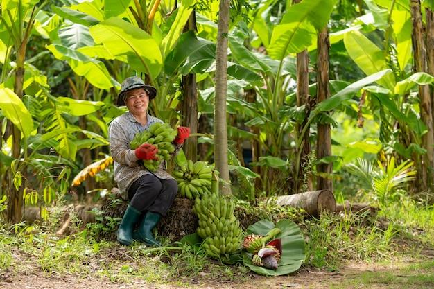 Fazendeiro asiático da mulher que carrega a banana verde na exploração agrícola. conceito de agricultura.