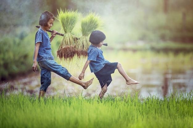 Fazendeiro asiático das crianças no campo do arroz.