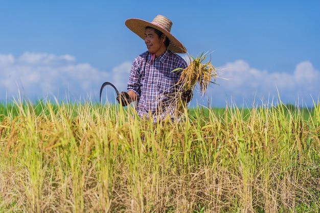 Fazendeiro asiático trabalhando no campo de arroz sob o céu azul