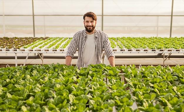 Fazendeiro barbudo feliz em camisa xadrez sorrindo e olhando para a câmera enquanto está atrás de brotos verdes dentro de uma estufa hidropônica