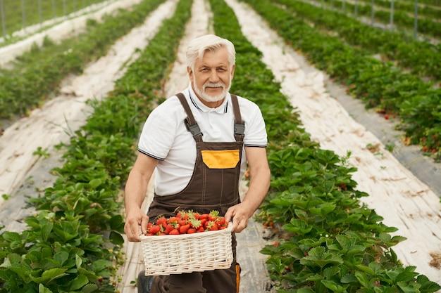 Fazendeiro com cesto cheio de morangos maduros