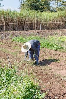 Fazendeiro de jardinagem