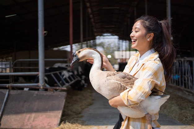Fazendeiro empresário asiático, ela está falando com o ganso