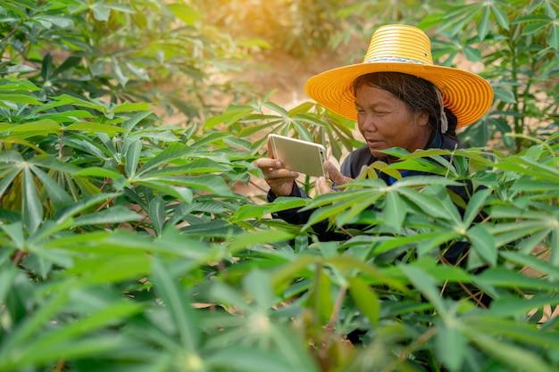 Fazendeiro esperto da mulher que guarda a tabuleta que está no campo da mandioca para verificar seu campo da mandioca. agricultura e conceito de sucesso fazendeiro inteligente