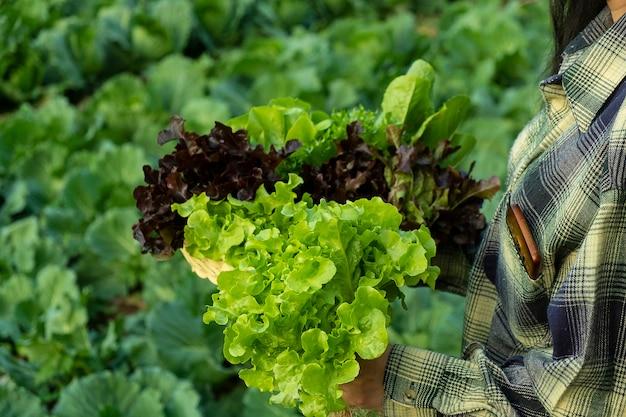 Fazendeiro está segurando carvalho verde vegetal e vermelho