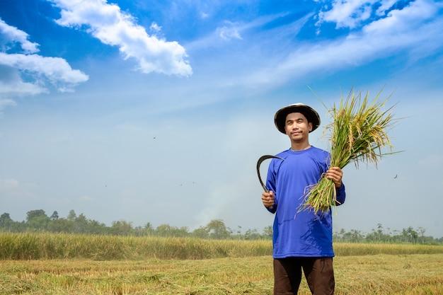 Fazendeiro feliz colheita paddy no campo de arroz tailândia